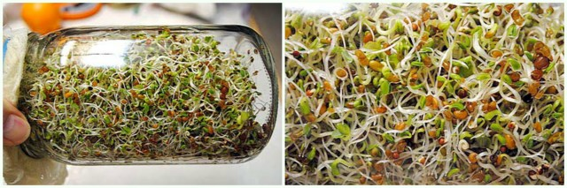 How to Grow Sprouts at Home